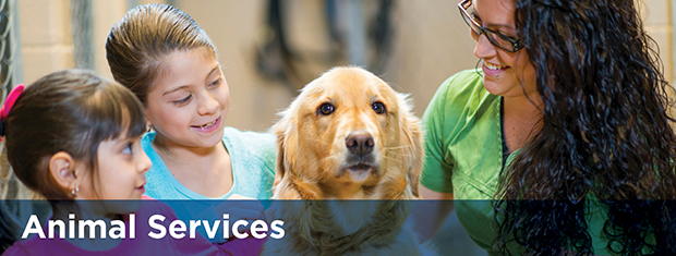 Vaughan Animal Services Dogs For Adoption