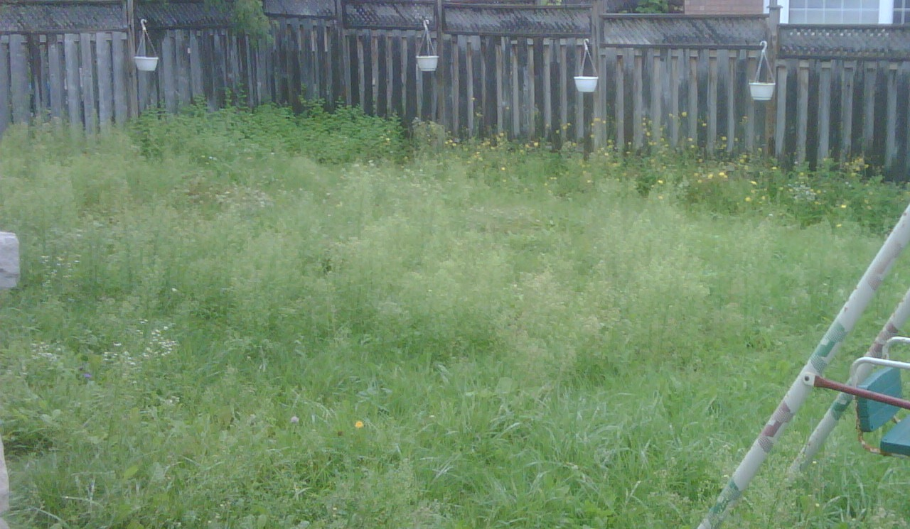 Picture of an unkept grass yard