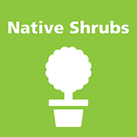 Native Shrubs