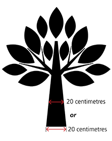 Picture of sample tree diameter
